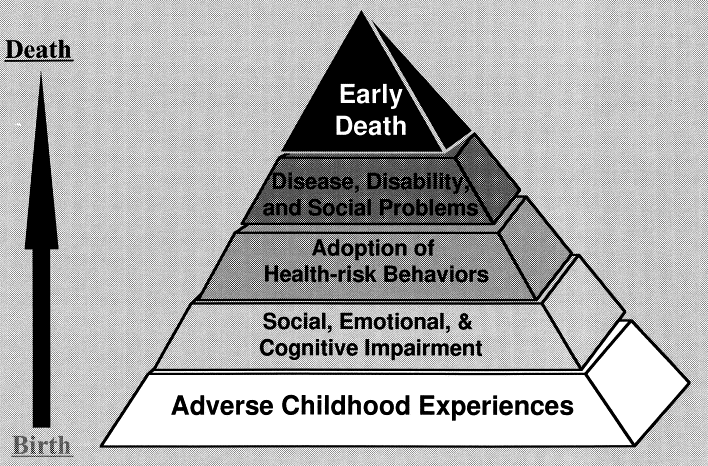 Figure 31.  The possible influences of ACEs on the lifespan.  Taken from Felitti VJ et al.